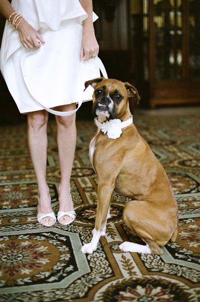 ¡Invita a tu mascota a tu boda!