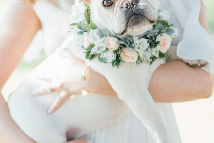 7 consejos para incluir a tu perro en tu boda / 7 tips to include your dog at your wedding