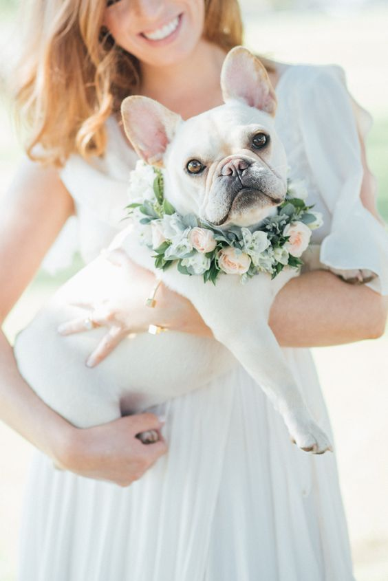 7 consejos para incluir a tu perro en tu boda / 7 tips to include your dog at your wedding